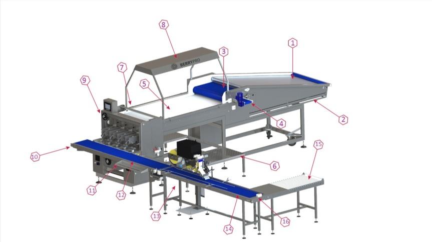 Máquina para envasado de arándanos para pequeñas y medianasempresas