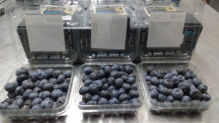 Ica: Senasa otorga certificado fitosanitario para exportación de arándanos aEspaña