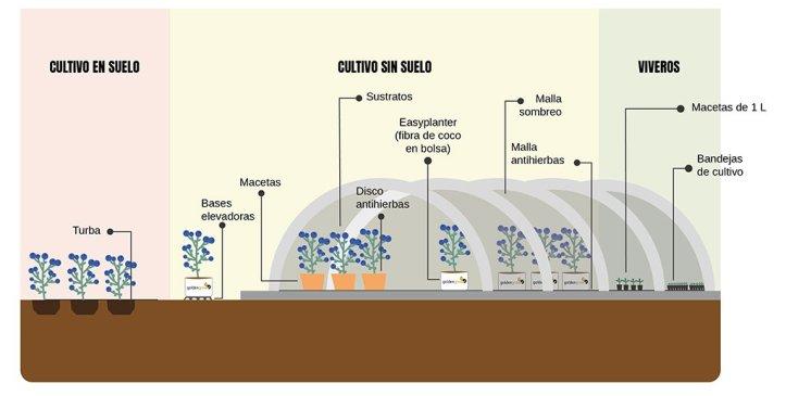 soluciones-agronomicas-berries